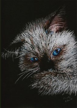 Cat in Pastel by Mirally