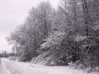 Winter Wonderland -- Roadside by rpg-chick