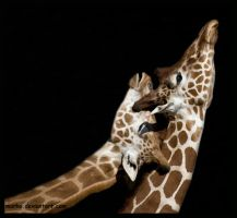 two giraffes by morho