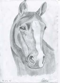 Horse by Padernoster