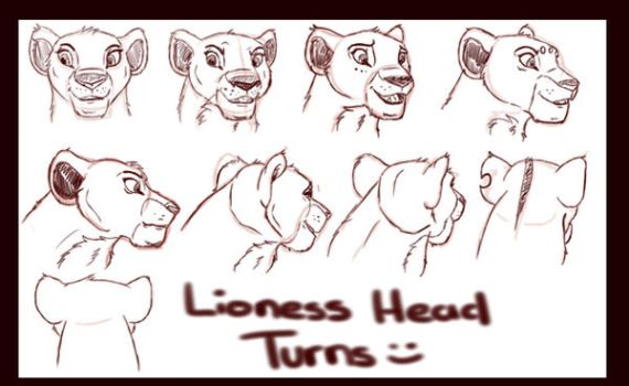 Lion Sketches by Brookcresent
