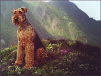 Airedale by glitchHP
