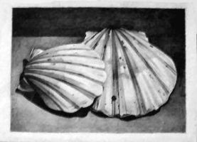 Shells - ACEO 199 by Arthay