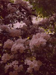 Vintage Blossom by FanFrye24