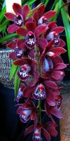 Orchid Show 2015 no.6 by Foozma73