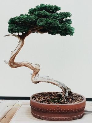 Bonsai by riverbirch92