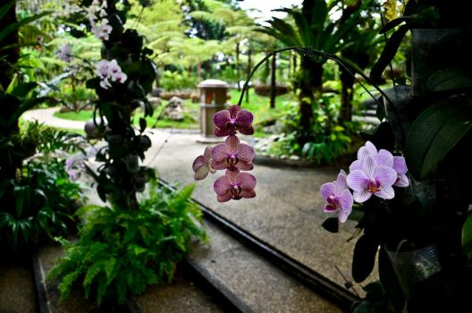 Orchids Garden 2 by 8xhx8