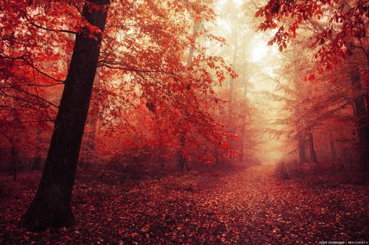 Red Forest V. by realityDream