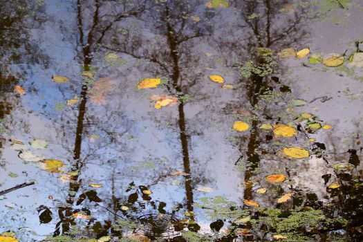 autumn reflection by Su58