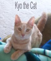 Kyo the Cat by thaliagracegontier