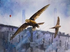 Swifts by sanderus
