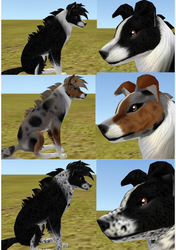 Three free collie presets by FabouCaribou