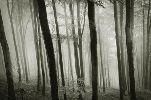 the forest of my dreams V by JoannaRzeznikowska