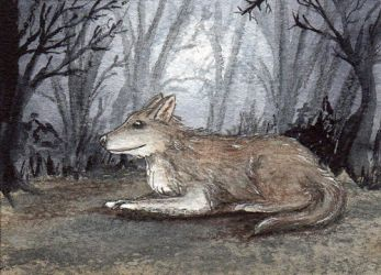 100 - ACEO / KAKAO - Grey Wolf by malloth86