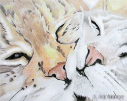 Two Cats (pencil drawing) by kfairbanks