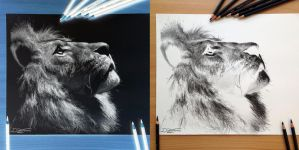 Inverted lion Pencil Drawing by AtomiccircuS