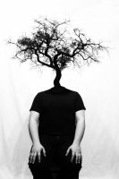 Branching by absentflight