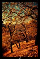 The Last Oak Trees. by dinmeleth2004