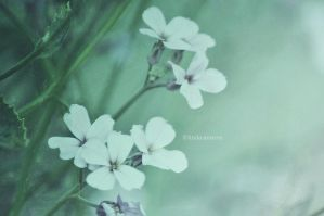 Muted Whispers by LindaMarieAnson