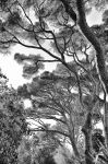 Black and White Trees 03 by theogroen