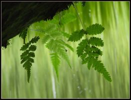 Fresh Green by kanes