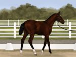 HSE dressage arena  by Heartsong-Estate