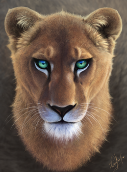 lioness by Angrycheetah