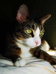 Aurora the cat by SublimeBudd