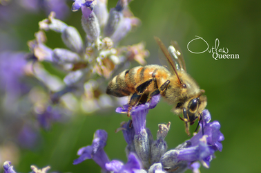 Bee #2 by OutlawQueenn