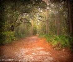 Walk This Path With Me by brunettephotographer