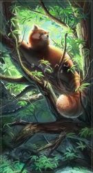 Red Panda (Link to prints in desc.!) by BabaKinkin