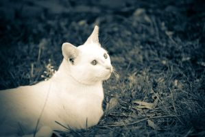 Rediculously Photogenic cat 2 by At0micDrag0n