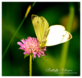 Butterfly Stories by chamathe