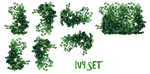REAL IVY PLANTS PNG by mysticmorning