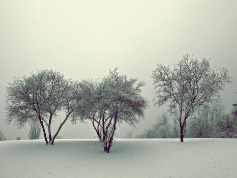 Trees In Winter by TheOtherSarshi
