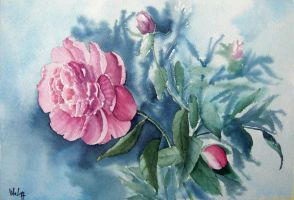 Paeonies by MagdalenaWolff