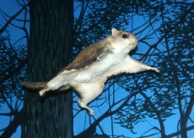 Denver Museum Flying Squirrel 280 by Falln-Stock