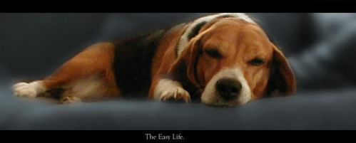 The Easy Life by dekand
