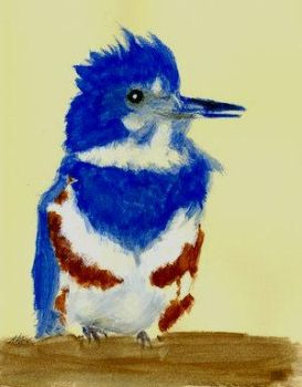 Belted Kingfisher Female by AshtarDragonfire