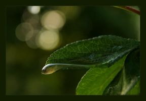 Nature tears by ixian by Ro-nature