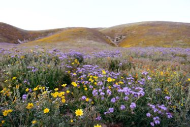Mountain Meadow Stock 2 by little-spacey