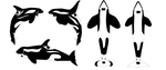 New closed species: show orcas by Dolphingurl21stuff