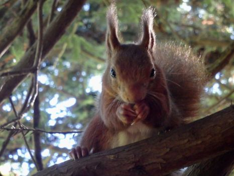 Having a lunch with you by Squirrels2poet2queen