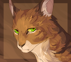 Tawnypelt by SsilverBeeze