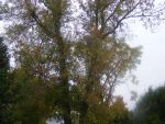 backyard fall images 2 by BlueIvyViolet