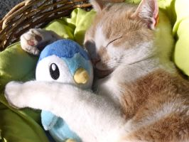 I haz Your Piplup...