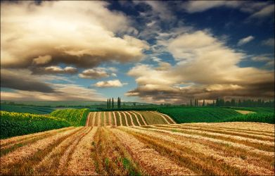 Harvested field too by jup3nep