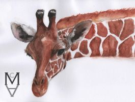 Giraffe by sarah-mca-art