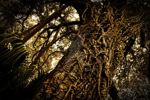 Gnarled Tree by TwilitLens