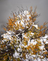 Fagus by slayer-of-moments